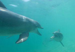 delfini parlano