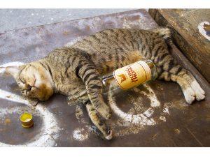 foto divertente gatto ubriaco