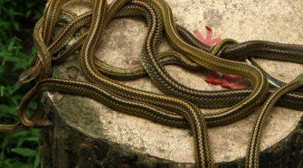 serpenti snakeisland