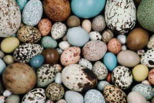 uova uccelli